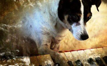 Serce psa film poetycki filozoficzny artystyczny Laurie Anderson Recenzja