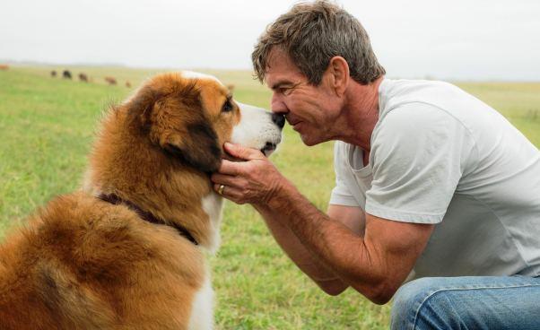 Recenzja filmu Był sobie pies komedia familijna dla dzieci opsie reinkarnacji Recenzja Opinie Oceny Odilu lat Rasy psów