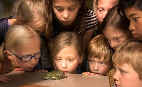 Film familijny dla dzieci odziewczynce inauczycielu zamieniał się wżabę Pan Żaba Fabuła Opinie